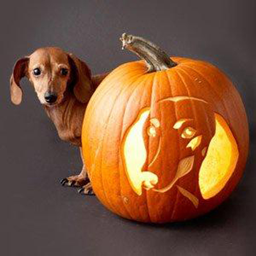 Cute halloween dachshund photo and wallpaper beautiful