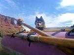 Alaskan Klee Kai in the boat