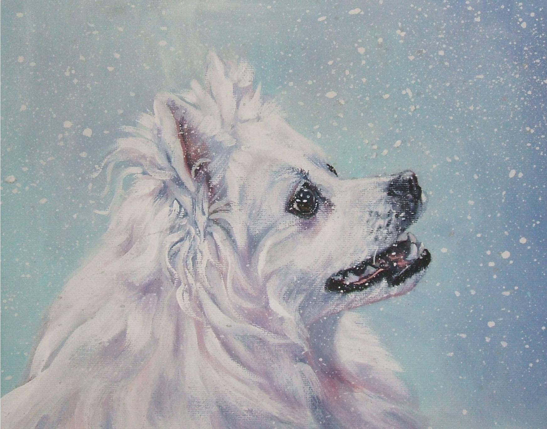 American Eskimo Dog  wallpaper
