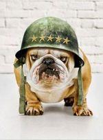 Angry Veterans Day Bulldog