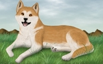 Beautiful Akita Inu dog picture