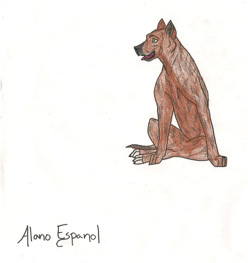 Alano Español drawing photo and wallpaper. Beautiful Beautiful Alano ...