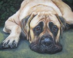 Beautiful drawing American Mastiff