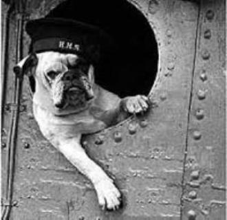 Black and white Veterans Day Bulldog wallpaper