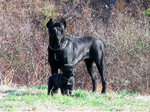 Black Dogo Sardesco