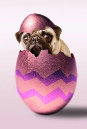 Black Easter Pug in egg wallpaper
