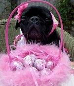 Black Easter Pug