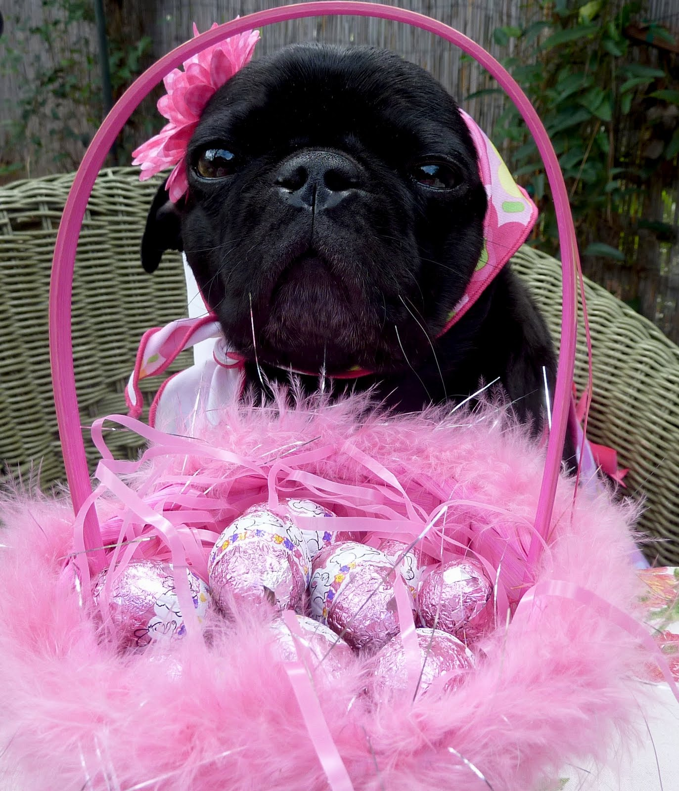 Black Easter Pug wallpaper