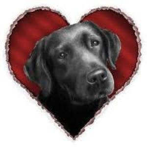 Black Labrador valentines day wallpaper