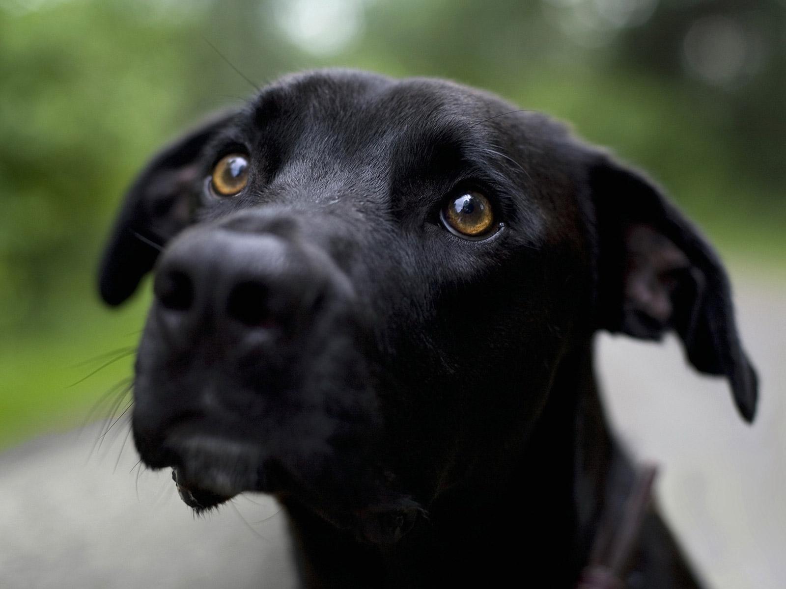 cute plott hound dog - photo #12