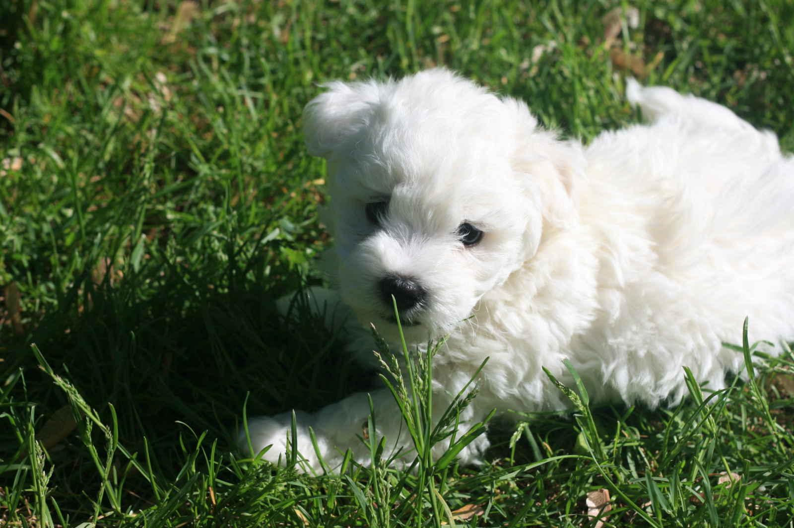 Best Dog Breed Encyclopedia