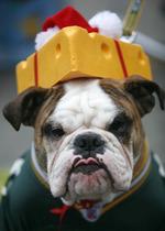 Bulldog costume