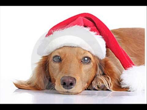 Christmas Dachshund wallpaper