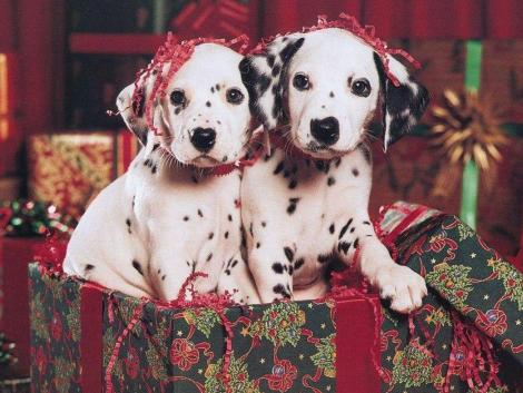 Christmas Dalmatian dogs wallpaper