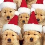 Christmas Golden Retriever dogs