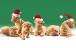 Christmas Shar Pei dogs