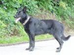 Cierny Sery Dog