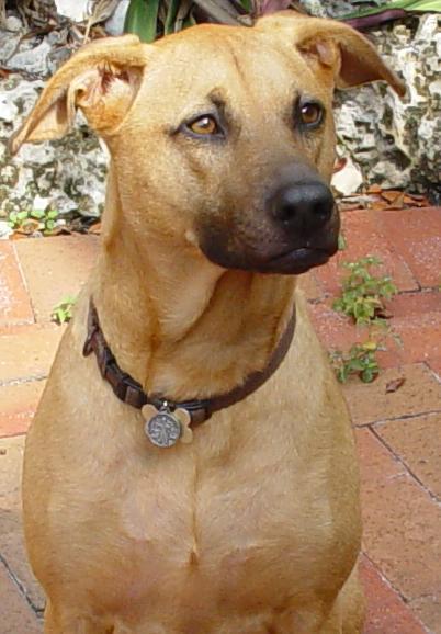 Портрет собаки combai фото