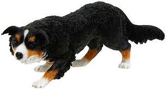 Собака камберлендская овчарка фото
