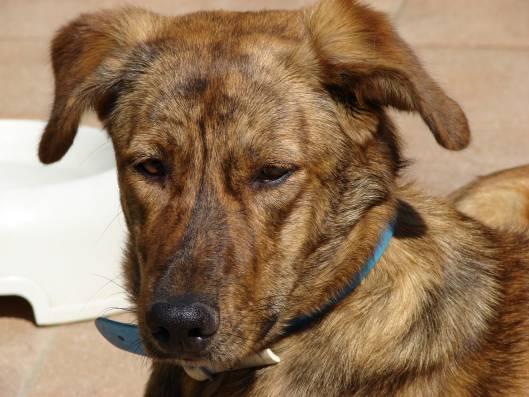 Симпатичная собака курсину фото