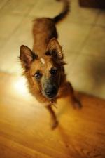 Симпатичная собака эло