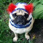 Cute Independence Day Pug