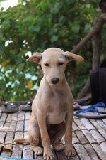 Cute Jonangi dog