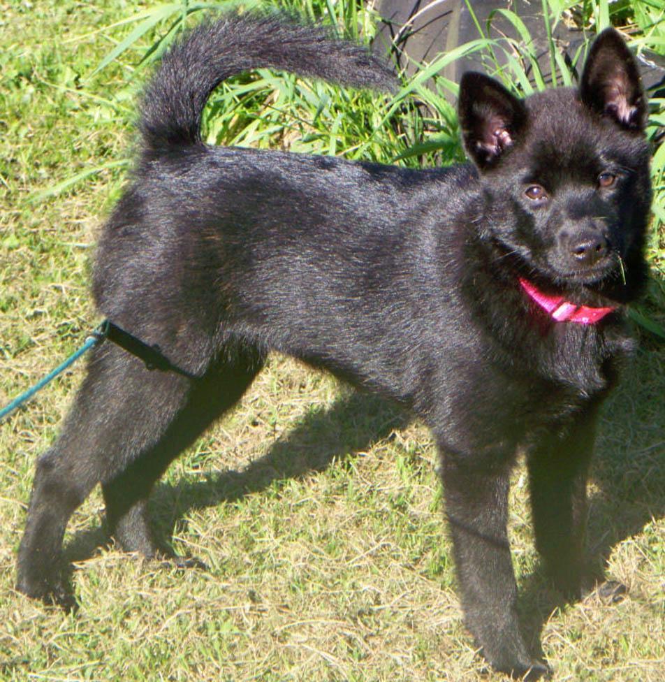 Симпатичная собака Каи фото