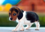 Cute small Beagle