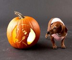 Dachshund and pumpkin