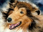 Drawing Collie Rough dog
