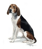 Darwing Treeing Walker Coonhound dog