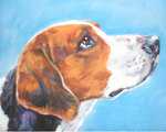 Drawn American Foxhound dog