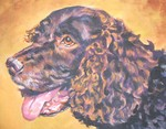 Drawn American Water Spaniel