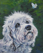 Drawn Dandie Dinmont Terrier