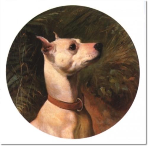Drawn English White Terrier wallpaper