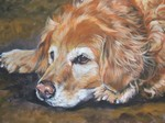 Drawn Golden Retriever