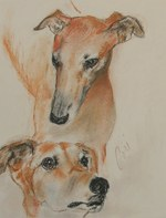 Drawn Greyhound dogs