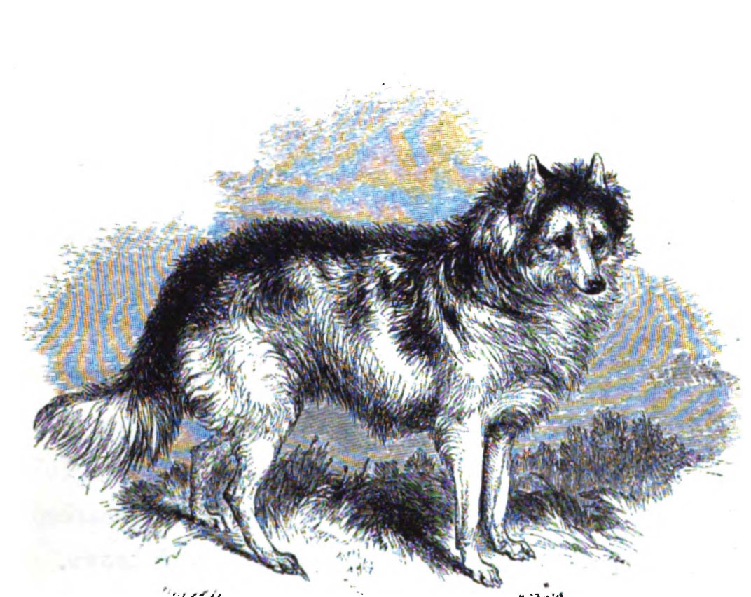 Нарисованная индийская собака hare фото