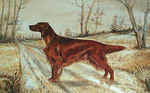 Drawn Irish Setter