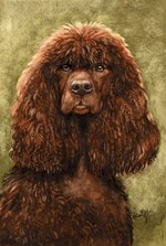Drawn Irish Water Spaniel
