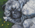 Drawn Keeshond dog