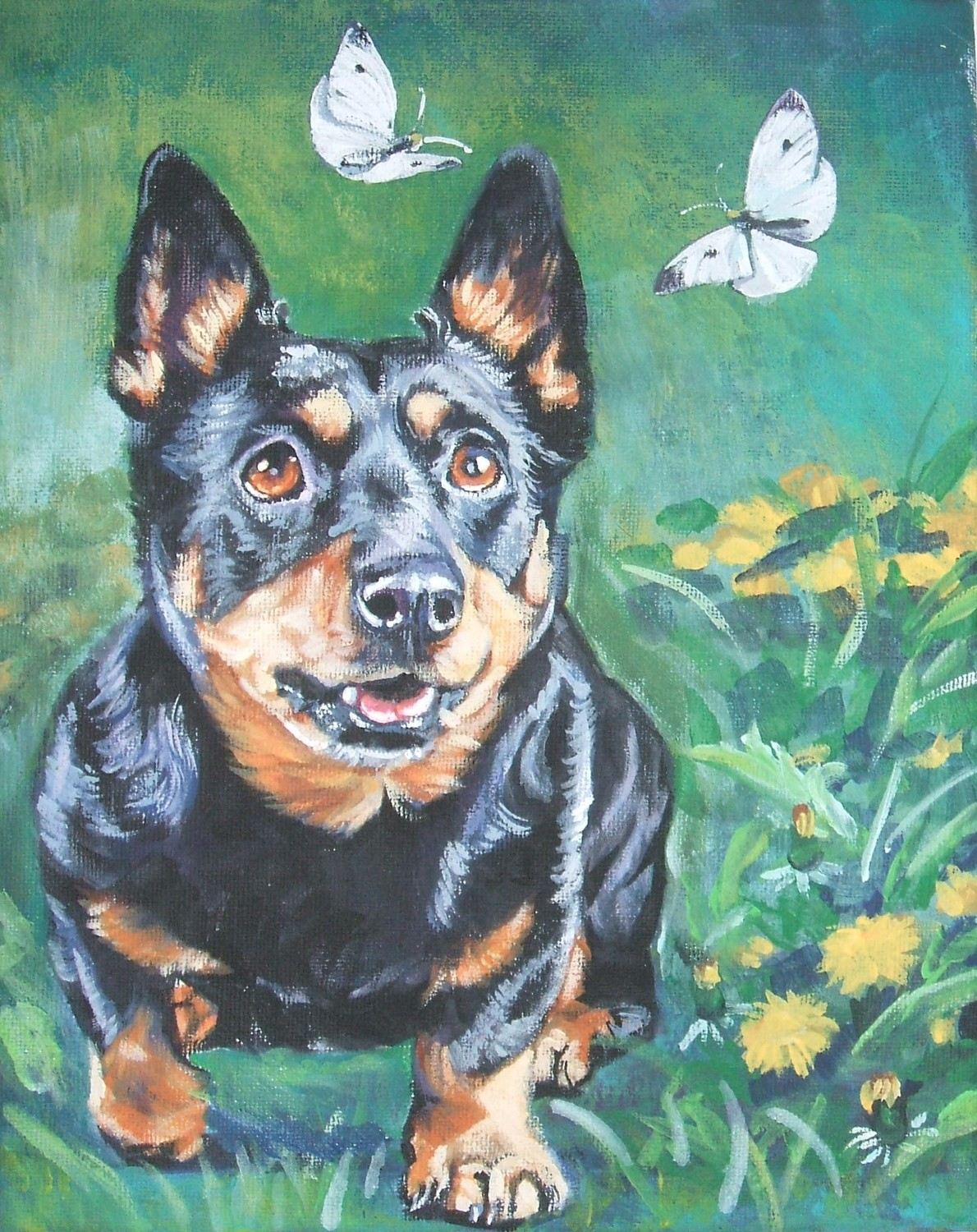 Drawn Lancashire Heeler dog wallpaper