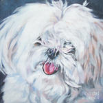 Drawn Maltese dog