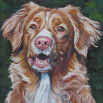 Drawn Nova Scotia Duck-Tolling Retriever