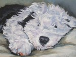 Drawn Old English Sheepdog