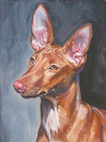 Drawn Pharaoh Hound