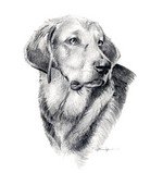 Drawn Polish Hound dog