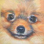 Drawn Pomeranian dog face