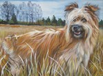 Drawn Pyrenean Shepherd